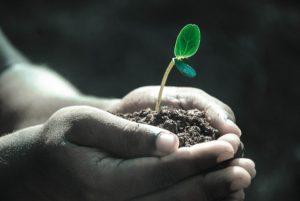 土や植物による天然石の浄化