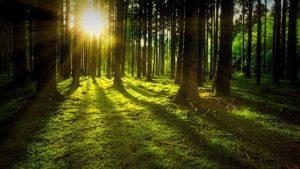 太陽光による天然石の浄化